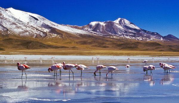 TOURISME & VOYAGE EN BOLIVIE